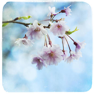 Photograph - Pink Blossoms by Tammy Wetzel