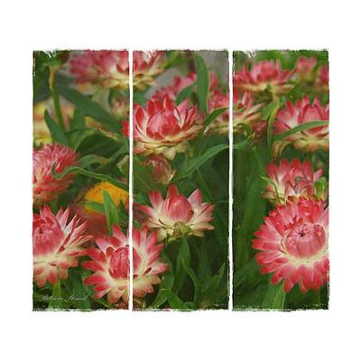Photograph - Pink Blossoms Triptych by Patricia Strand