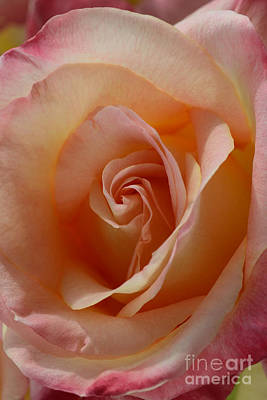 Photograph - Pink Blush by Sarah Schroder