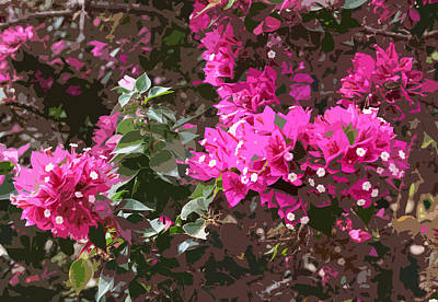 Photograph - Pink Bougainvillea Blossoms by John Orsbun
