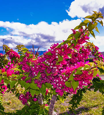 Photograph - Pink Bush by Lisa Cortez