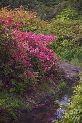 Dreamy Pink Park Scene Photograph - Pink Bush by Svetlana Sewell