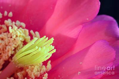 Photograph - Pink Cactus Flower by Tamara Becker