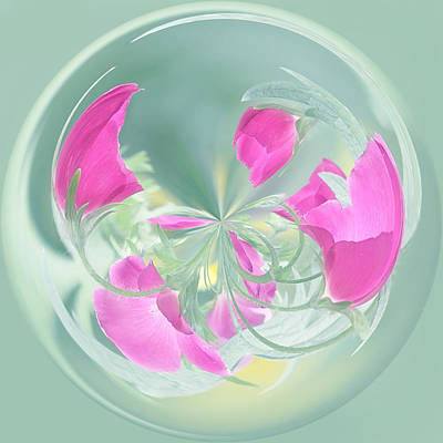 Photograph - Pink California Poppy Orb by Kim Hojnacki