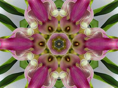 Digital Art - Pink Calla Lily Flower Mandala by Diane Lynn Hix