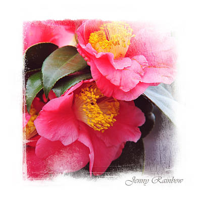 Pink Camellia. Elegant Knickknacks Art Print by Jenny Rainbow