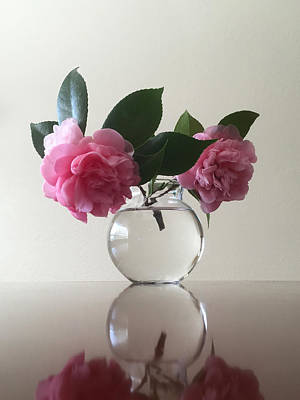 Photograph - Pink Camellia by Masha Batkova