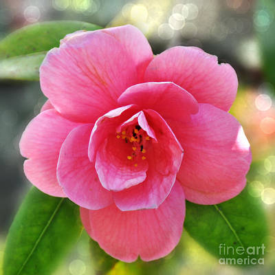 Photograph - Pink Camellia  by Mindy Bench