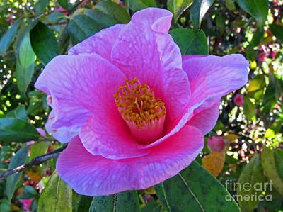 Photograph - Pink Camilla Flower  by Valerie Garner