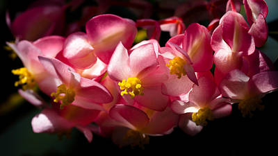 Plant Photograph - Pink Cascade by David Patterson