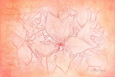 Photograph - Pink Christmas Poinsettias by Paulette B Wright