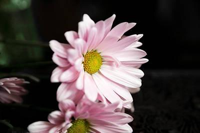 Photograph - Pink Chrysanthemum by Milena Ilieva