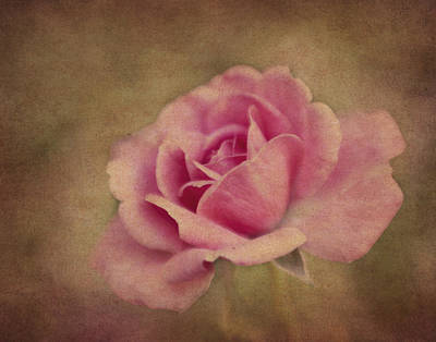 Photograph - Pink Classic by David and Carol Kelly