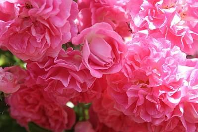 Photograph - Pink Climbing Roses by Tracey Harrington-Simpson