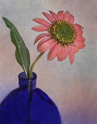 Photograph - Pink Cone Flower by David and Carol Kelly