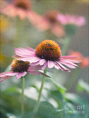 Cone Flower Photograph - Pink Cone by Rebecca Cozart