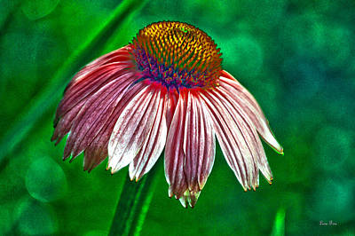 Photograph - Pink Coneflower Hdr Art by Lesa Fine