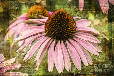 Photograph - Pink Coneflower by Vicki DeVico