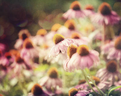 Pink Coneflowers Art Print by Lisa Russo