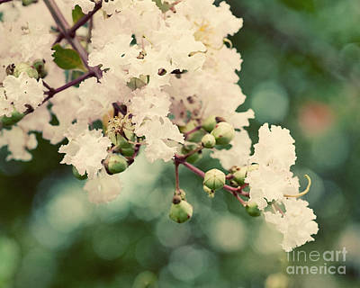 Flowers Photograph - Pink Crepe Myrtle by Erin Johnson