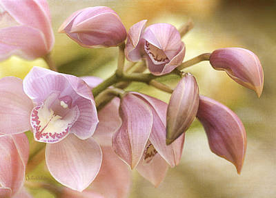 Photograph - Pink Cymbidium Orchids by Julie Palencia
