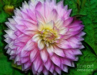 Photograph - Pink Dahia Beauty by Shirley Mangini