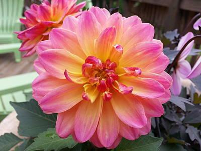 Nirvana - Pink Dahlia by Brenda Stevens Fanning