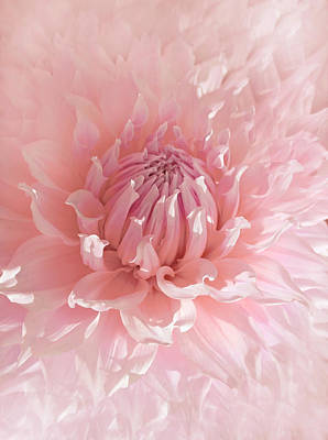 Photograph - Pink Dahlia Flower  by Jennie Marie Schell