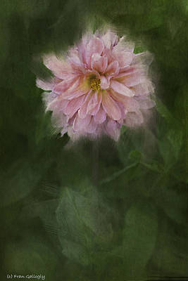 Photograph - Pink Dahlia by Fran Gallogly