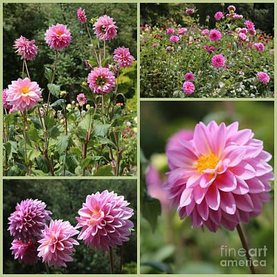 Dahlias Photograph - Pink Dahlia Garden Collage by Carol Groenen
