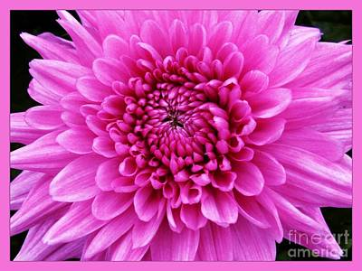 Photograph - Large Pink Dahlia by Joan-Violet Stretch