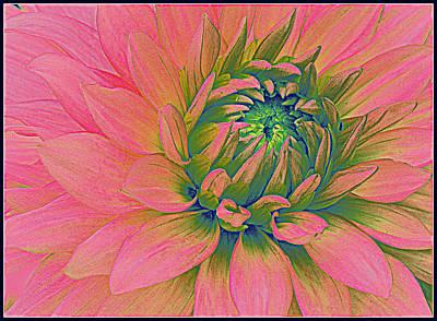 Pink Dahlia Pop Art Original