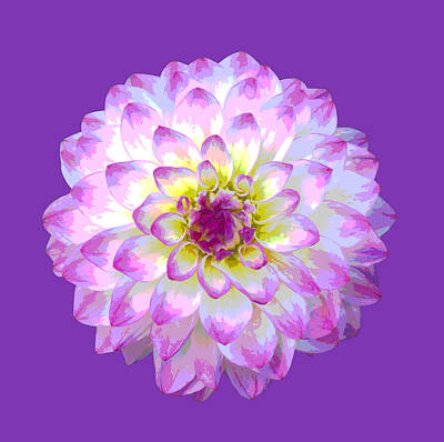 Pink Dahlia Posterized On Purple. Art Print by Rosemary Calvert
