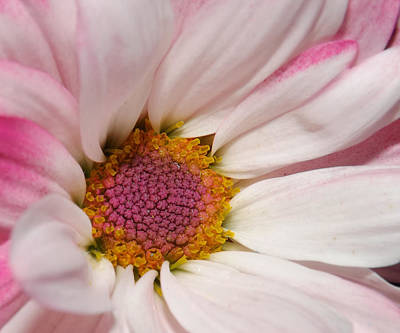 Negative Space - Pink Daisy  by Christina Young