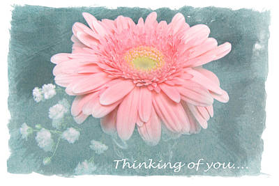 Photograph - Pink Daisy II by Diane Wood