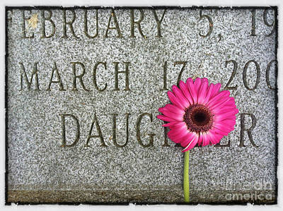 Grief Photograph - Pink Daisy On Grave For Daughter by Amy Cicconi