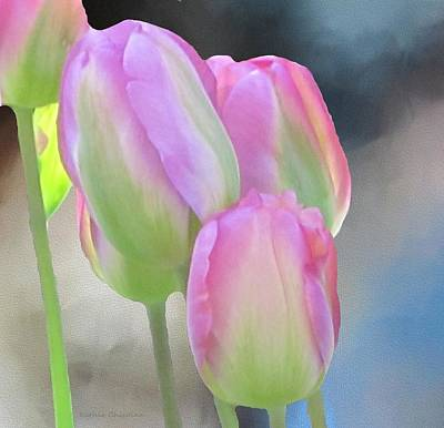 Photograph - Pink Delicacy by Kathie Chicoine