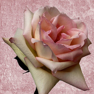 Photograph - Pink Delight by Judy Vincent