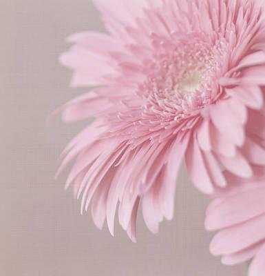 Pink Delight Art Print by Kim Hojnacki