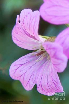 Photograph - Pink Details by Chris Heitstuman