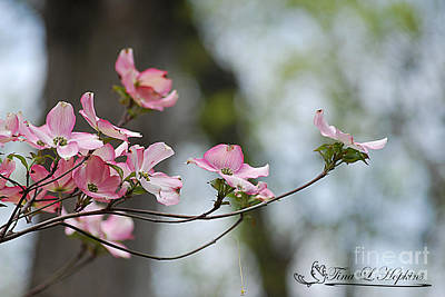Photograph - Pink Dogwood 20120415_66a by Tina Hopkins