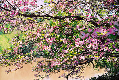Photograph - Pink Dogwood I by Anita Lewis