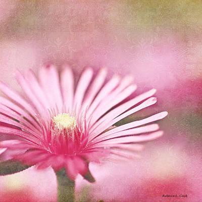 Photograph - Pink Dreams by Bellesouth Studio