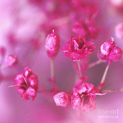 Kujo Photograph - Pink Dreams by Karin Ubeleis-Jones