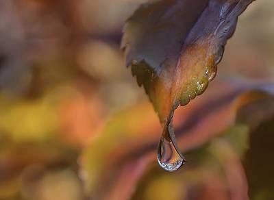 Photograph - Pink Drip by Rae Ann  M Garrett