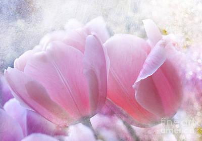 Pink  Art Print by Elaine Manley