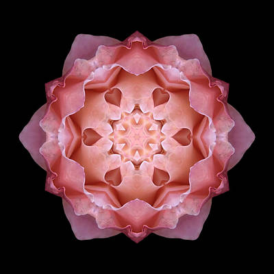 Photograph - Pink Fall Rose Flower Mandala by David J Bookbinder