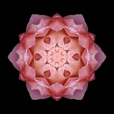 Pink Fall Rose Flower Mandala Art Print