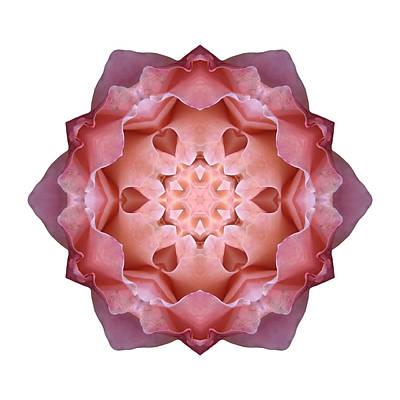 Photograph - Pink Fall Rose I Flower Mandala White by David J Bookbinder