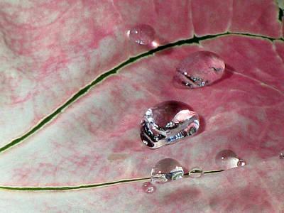 Pink Fancy Leaf Caladium - September Tears Art Print by Pamela Critchlow